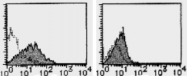 AM26622FC-N - Podocalyxin / PODXL