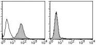 AM26622RP-N - Podocalyxin / PODXL