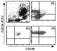 AM26624AF-N - CD148 / PTPRJ