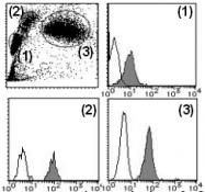 AM26624RP-N - CD148 / PTPRJ