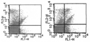 AM26632FC-N - CD170 / SIGLEC5