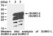 AM26639AF-N - SUMO2