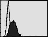 AM26653AF-N - CD218a / IL18R1