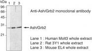AM26660PU-N - GRB2  / ASH