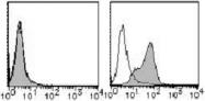 AM26504RP-N - CD155 / PVR
