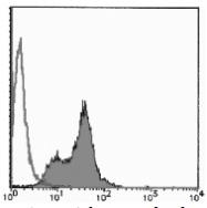 AM26681AF-N - Bromodeoxyuridine (BrDU)