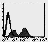 AM26681RP-N - Bromodeoxyuridine (BrDU)