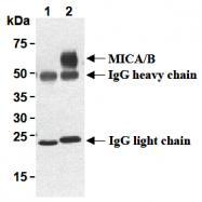 AM26693AF-N - MICA + MICB