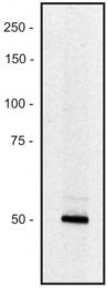 AM26707PU-N - PCLO