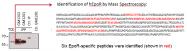 AM26787PU-N - Erythropoietin receptor