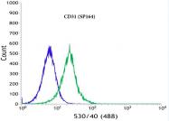 AM32446PU-N - CD31 / PECAM1
