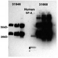 AM32745SU-N - SFTPA1