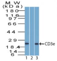 AP32834PU-T - CD3