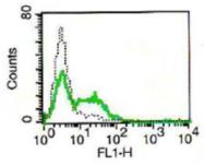 AM32991AF-N - CD161 / KLRB1