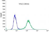 AM33238PU-S - PACAP type II Receptor / VIP Receptor