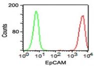 AM33243RP-S - CD326 / EPCAM / TACSTD1