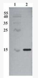 AM33440PU-N - CDNF