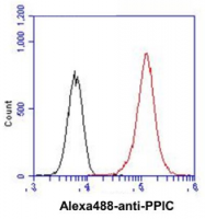 AM39042PU-N - Cyclophilin C