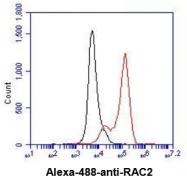 AM39043PU-N - RAC2