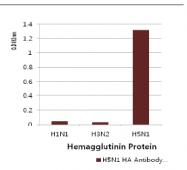 AM39074PU-N - Influenza A H5N1