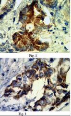 AM39090PU-N - PVRL4 / Nectin 4
