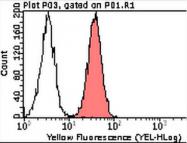 AM39093PU-N - CD151 / TSPAN24