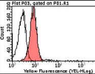 AM39094PU-N - CD151 / TSPAN24