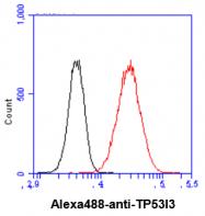 AM50012PU-N - TP53I3
