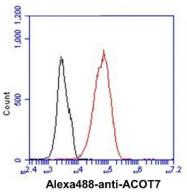 AM50031PU-N - ACOT7 / BACH