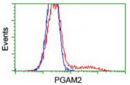 AM50090PU-N - PGAM2