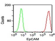 AM50137PU-S - CD326 / EPCAM / TACSTD1