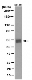 AM50428PU-N - RBBP5 / RBQ3