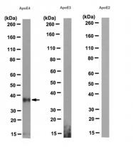 AM50540PU-N - Apolipoprotein E / Apo E