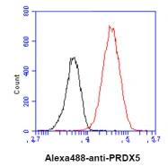 AM50639PU-N - Peroxiredoxin-5 / PRDX5