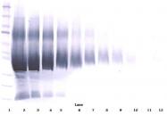 AP01139PU-N - IGFBP5