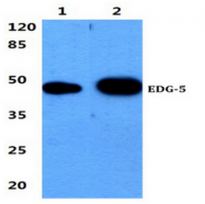 AP01198PU-N - EDG5 / S1P2