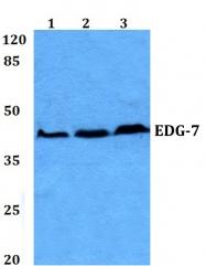 AP01256PU-N - EDG7 / LPAR3