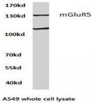 AP01270PU-N - mGluR5 / GRM5