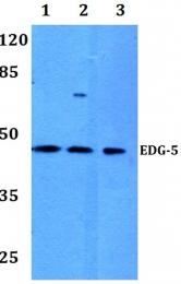 AP01311PU-N - EDG5 / S1P2