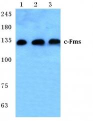 AP01353PU-N - CD115