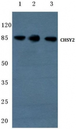 AP01393PU-N - CHSY3
