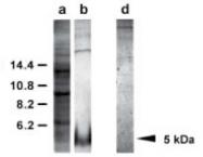 AP02293SU-N - EGF Precursor (Suberites domuncula)