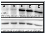 AP03033SU-N - Phosphoserine