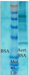 AP03035PU-N - Acetylated Lysine