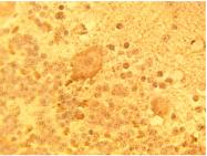 AP05308PU-N - DEGS1