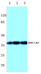 AP06014PU-N - APAF1