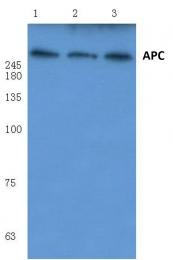 AP06015PU-N - APC / DP2.5