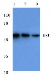AP06100PU-N - ELK1