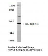 AP06162PU-N - HDAC8