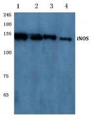 AP06181PU-N - NOS2